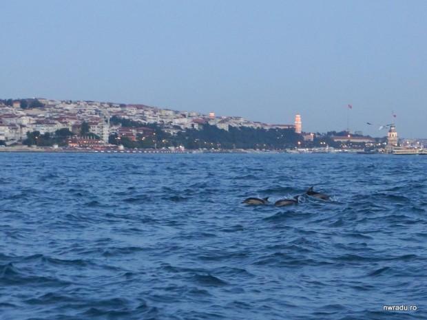 2012_06_09_delfini