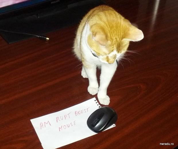 mouse_shamed