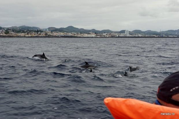delfini_balene_sao_miguel_azore_07