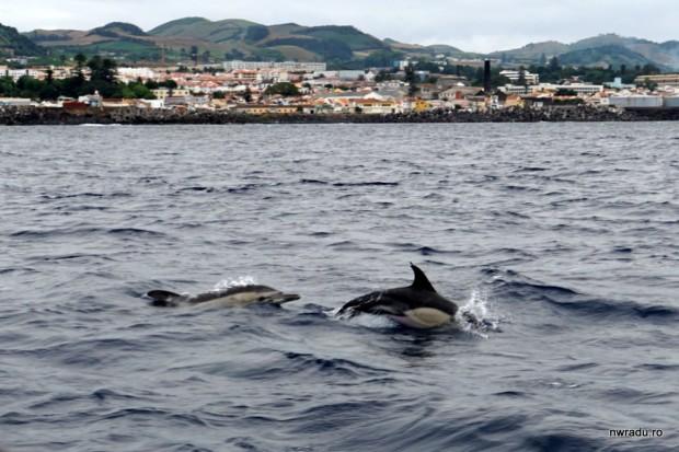 delfini_balene_sao_miguel_azore_08