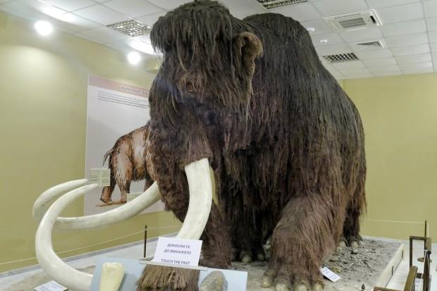 ruse_10_muzeu