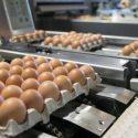 Drumul oului de la găină la raftul supermarketului